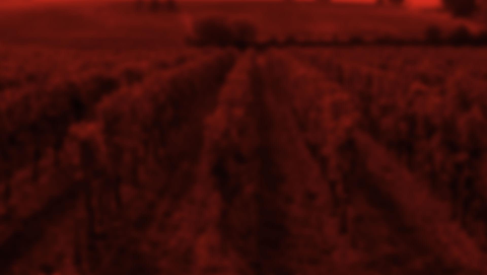 Frontera Wine Cabernet Sauvignon