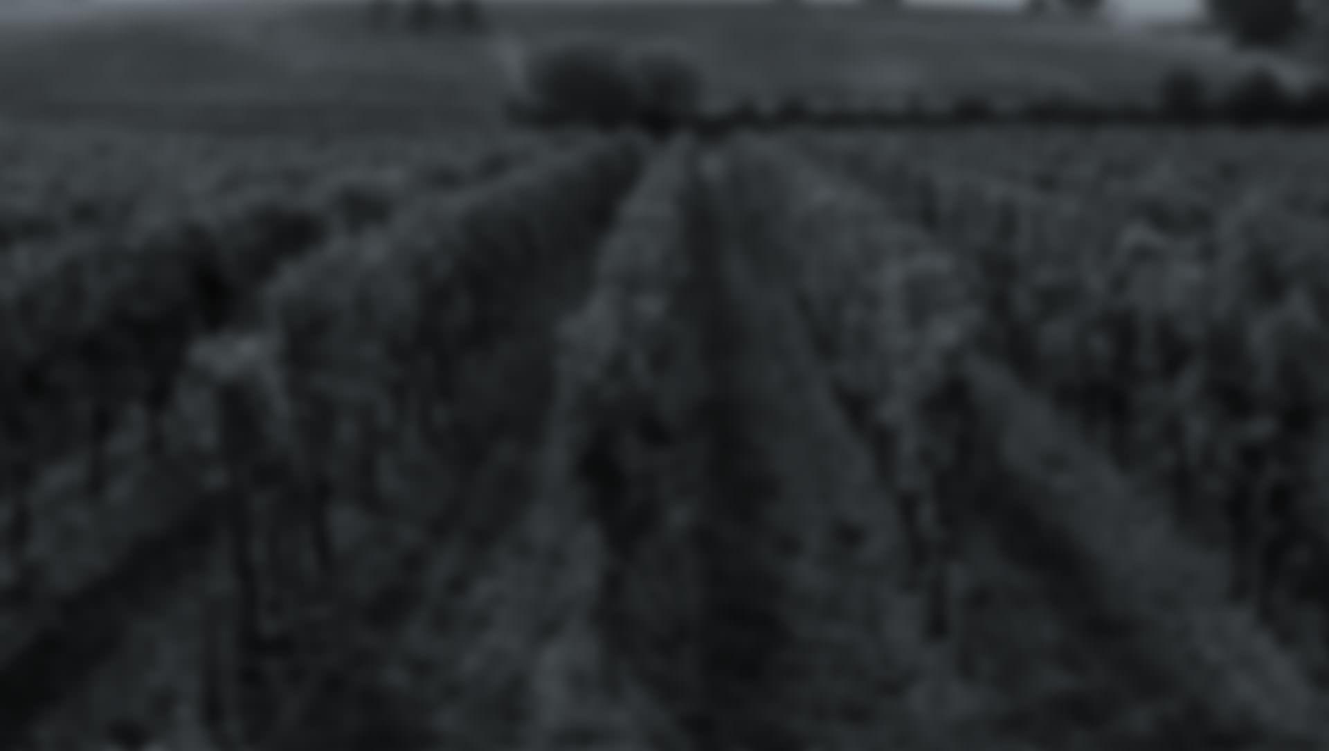 Frontera Wine Pinot Grigio