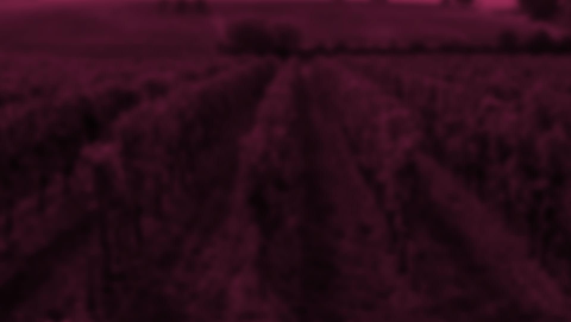 Frontera Wine Pinot Noir