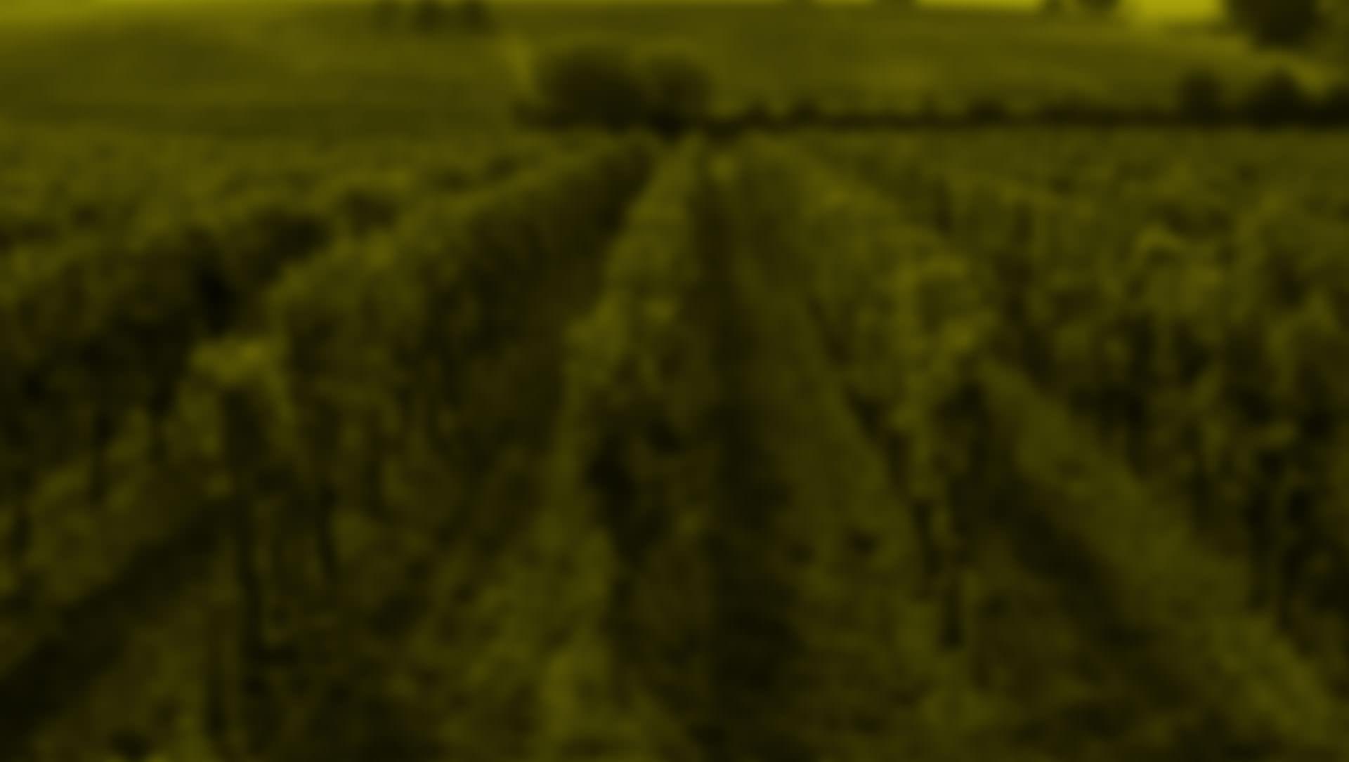 Frontera Wine SB