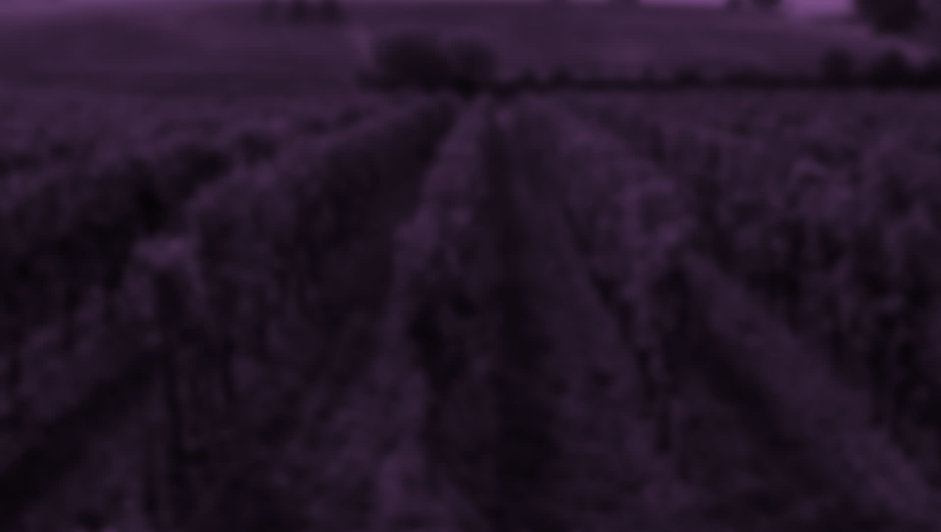 Frontera Wine Merlot