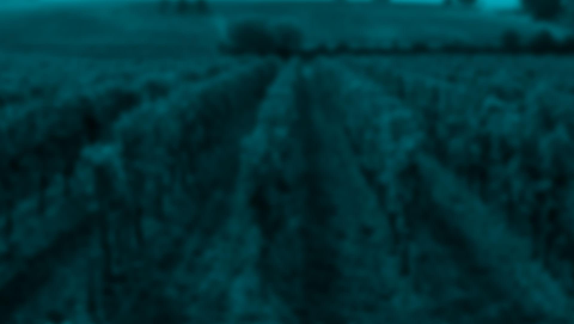 Frontera Wine Moonlight